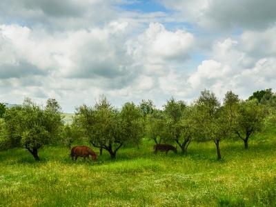 Le Erbe spontanee e l'Olio EVO…virtù terapeutiche e la cucina Ciociara tra innovazione e tradizione…